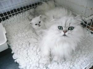Skye with Kitten
